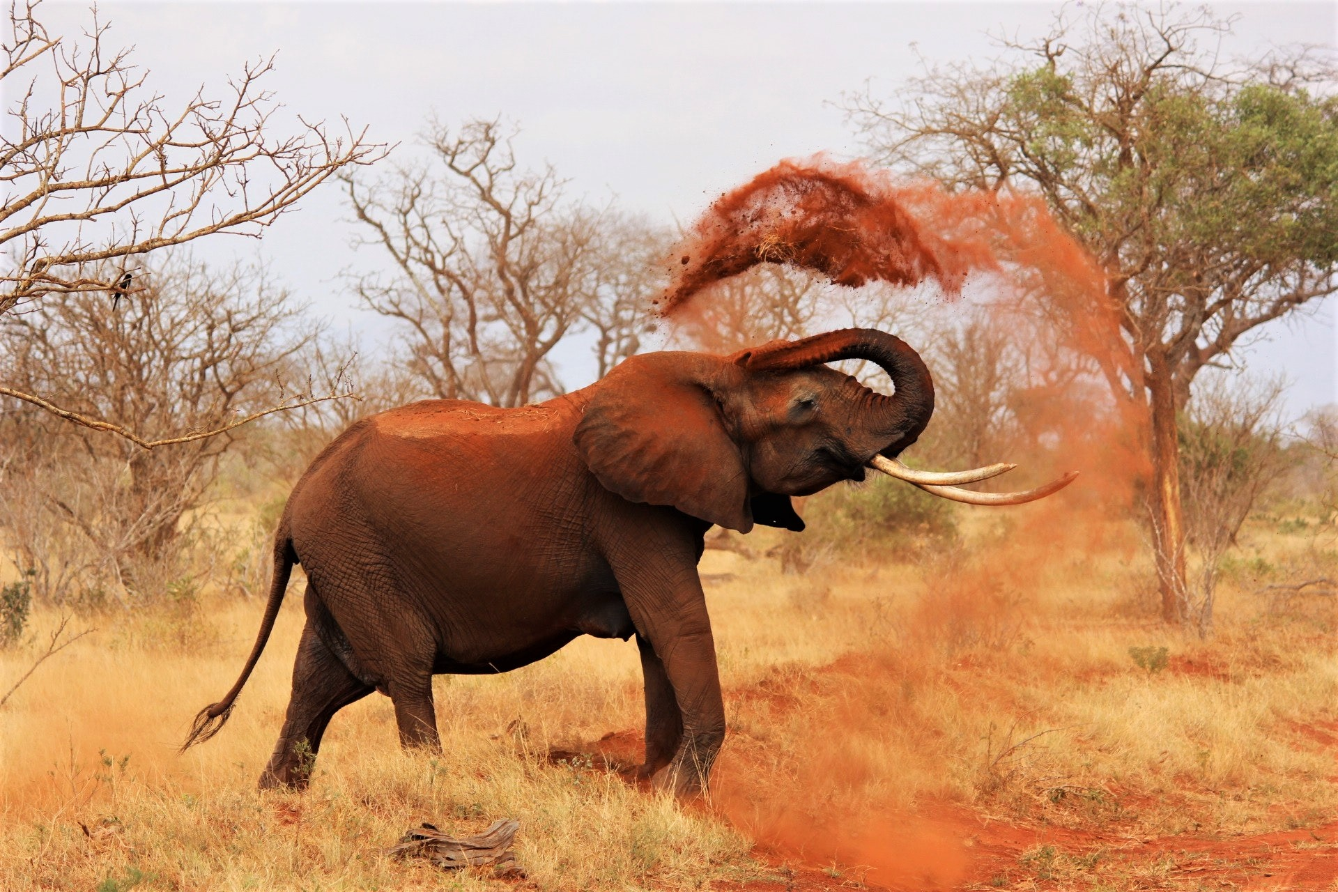 This image has an empty alt attribute; its file name is africa-animal-elephant-70080.jpg